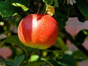 Lead scoring, hoe pluk je de rijpe appels?